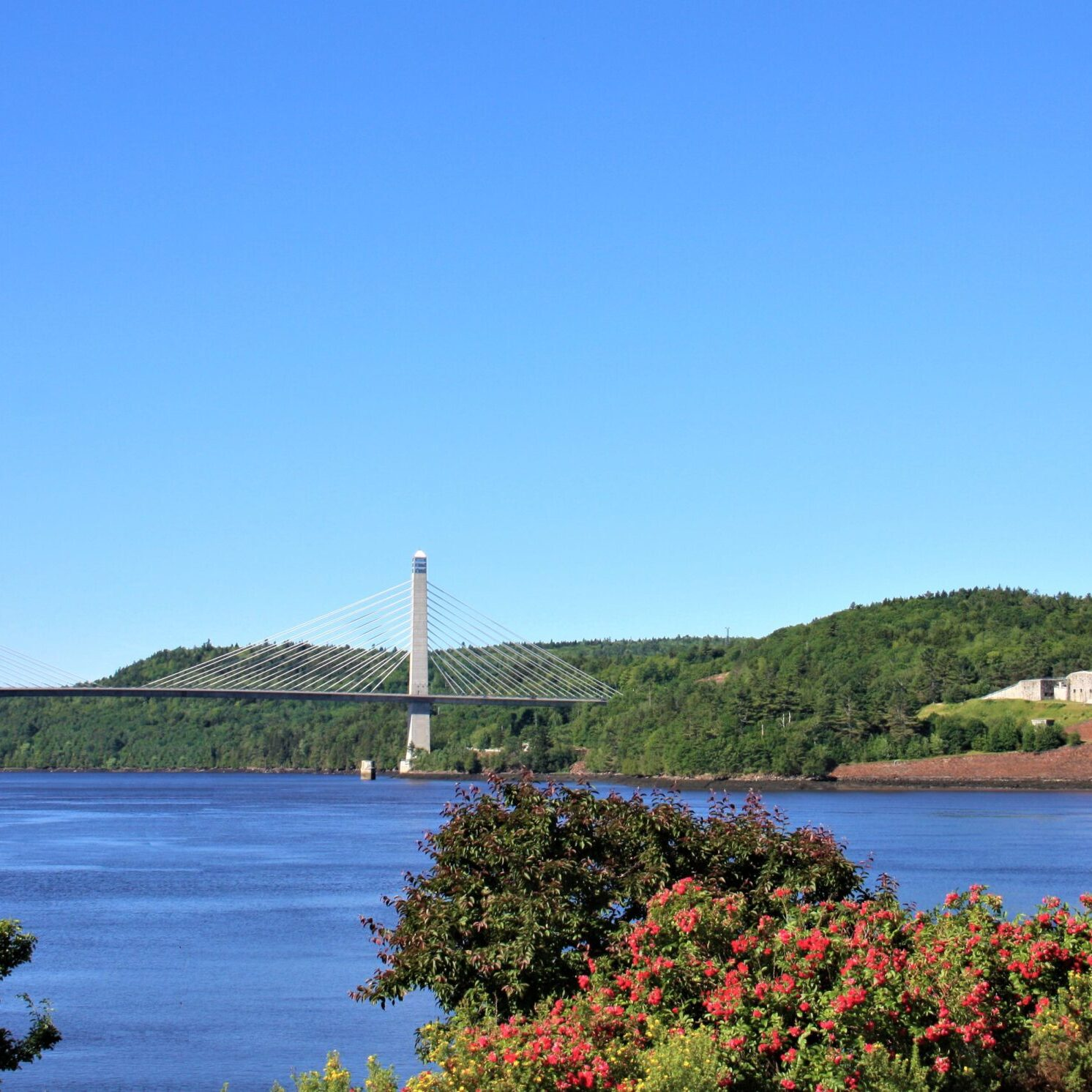 Bucksport bridge with flowers in foreground second try